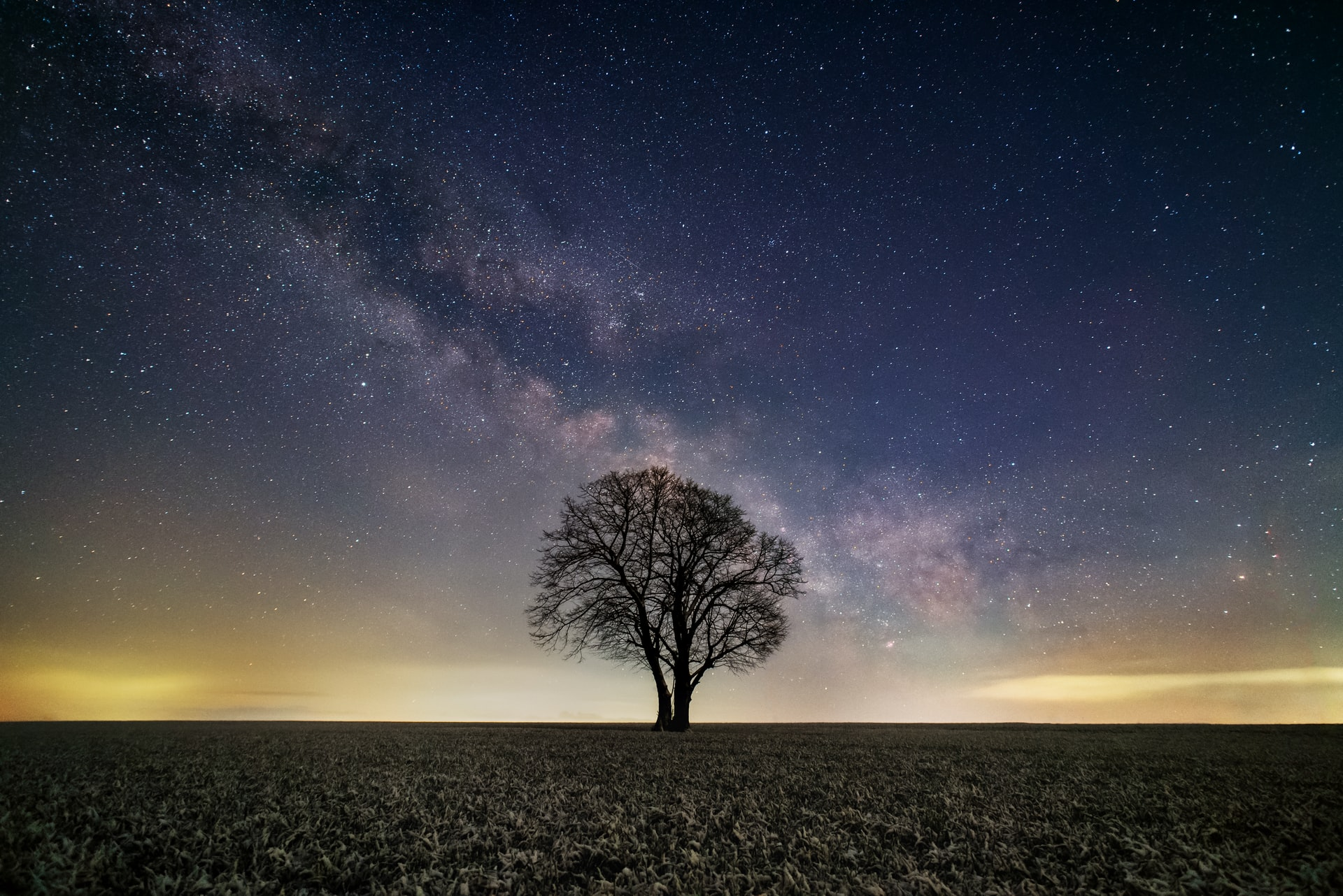 A picture of a tree at nighttime